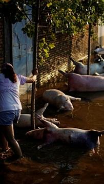 Petani China terpaksa lihat mata pencarian dihanyut banjir